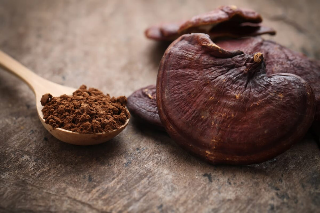 Reishi-Mushroom-Powder-On-A-Wooden-Spoon-Next-To-A-Reishi-Mushroom