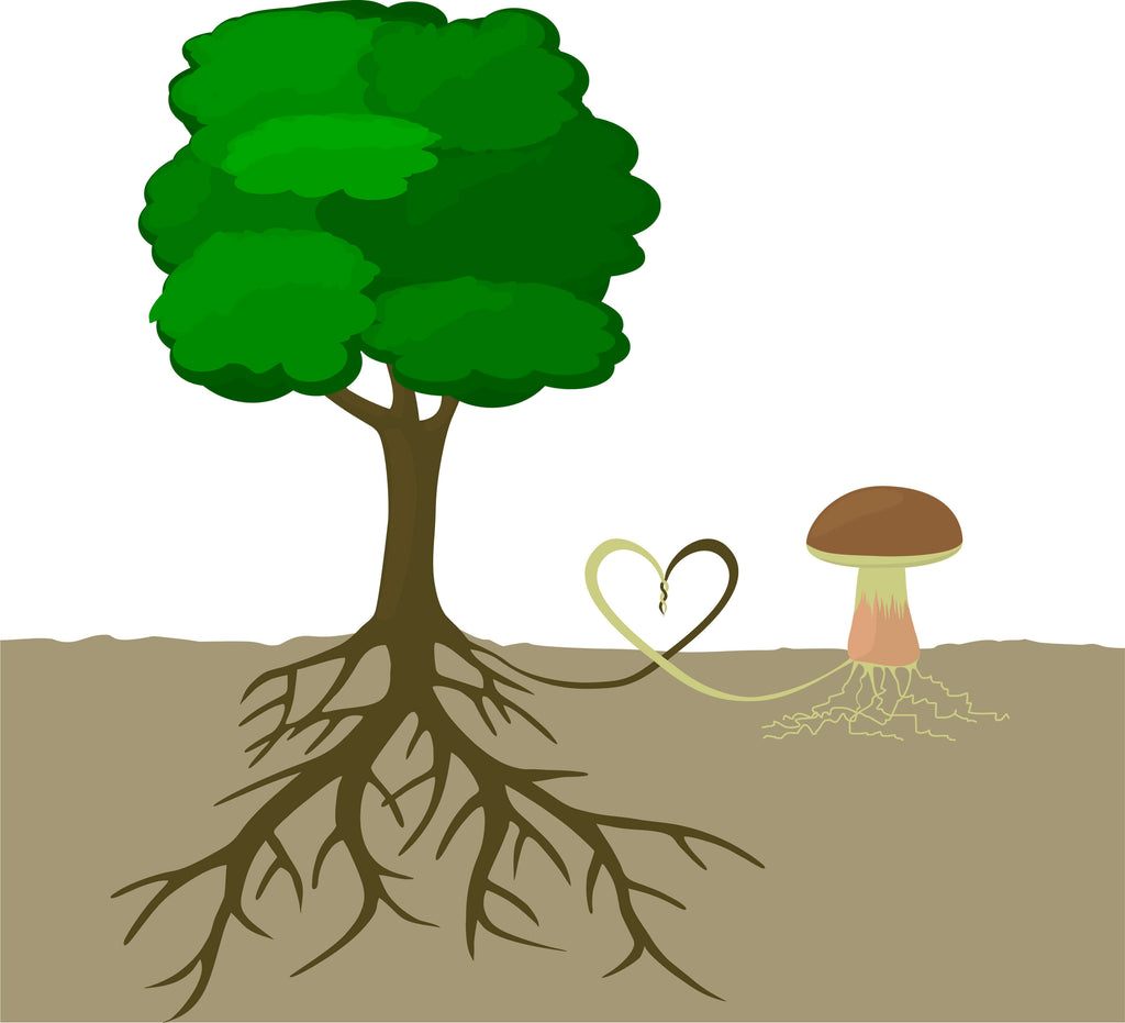 cartoon image of tree roots connecting with mushroom roots (mushroom mycelium)