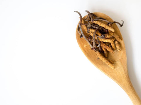 Cordyceps mushroom on a wooden spoon with a white background
