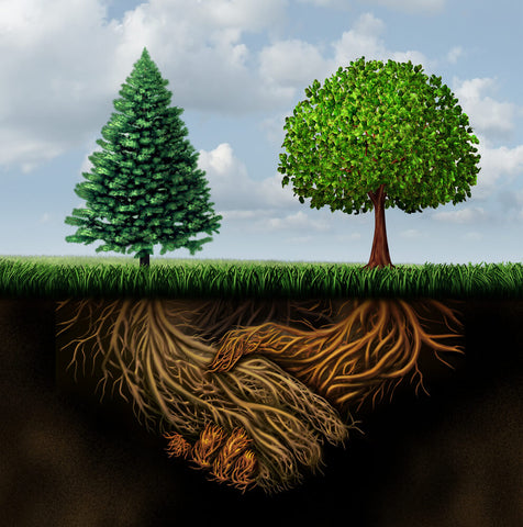 A cartoon graphic of two trees with their roots intertwined beneath the surface, forming a handshake shape