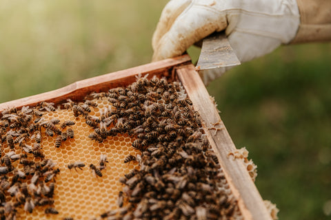 bees swarming around a hive with a beekeepers hand