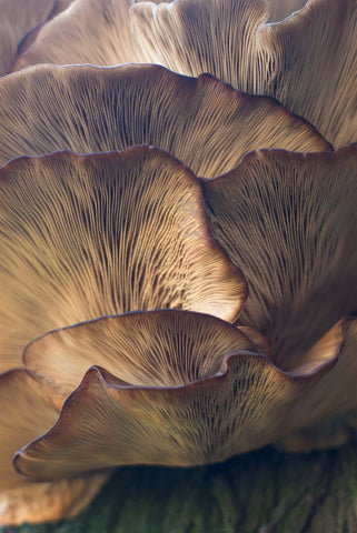 Close up of the underside of mushrooms