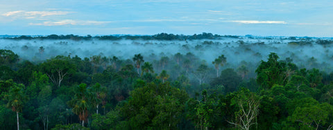 A majestic Amazon rainforest with low-lying clouds
