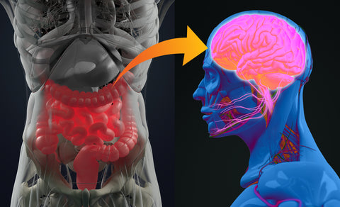 A graphic of the gut brain connection, show the gut and an arrow pointing toward the brain, representing the link between the two