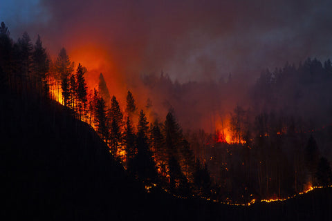 California bush fires