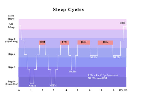 A diagram of the sleep cycle, showing the increase of REM over the night