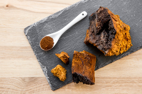 Chaga mushroom cut open to reveal its bright orange colour. It's a birds eye view with a spoon holding Chaga powder, too.
