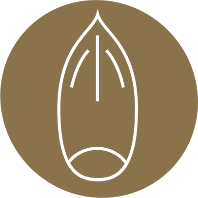Root'd Best Sources of Selenium in Brazil Nuts Icon