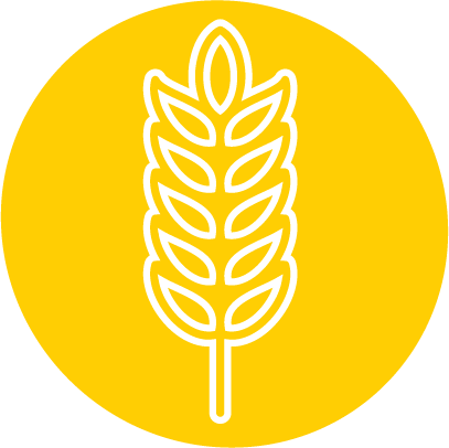 Root'd Best Sources of Vitamin B2 Wheat Icon