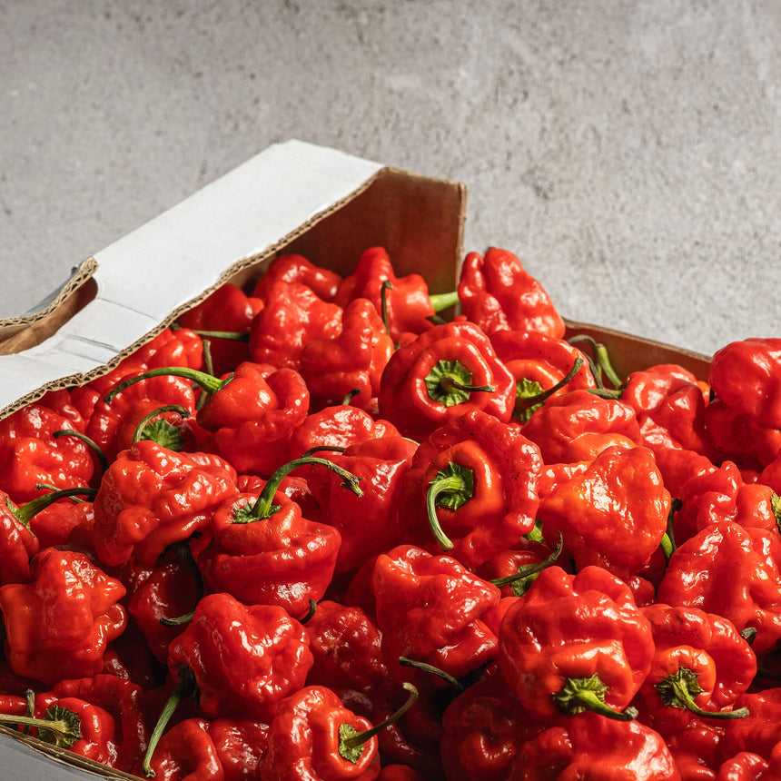 Scotch Bonnet Red | 150g