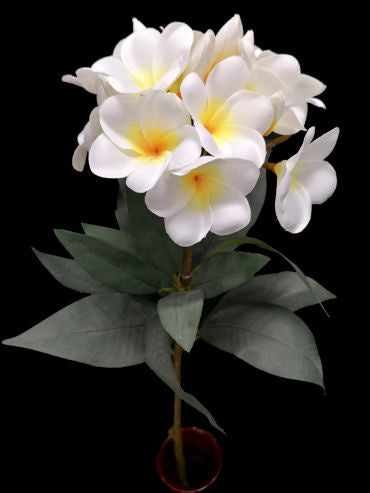 Cream/Yellow Frangipani with 13 Flowers