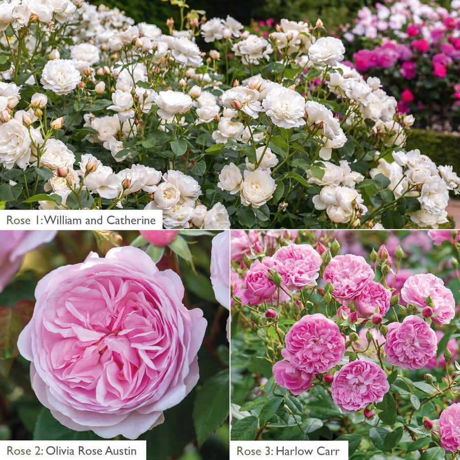 White & Pink Flowering Bundle