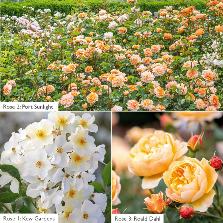 White & Apricot Flowering Bundle