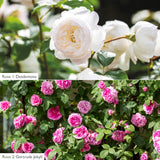 White & Pink 6ft Fence & Border Bundle
