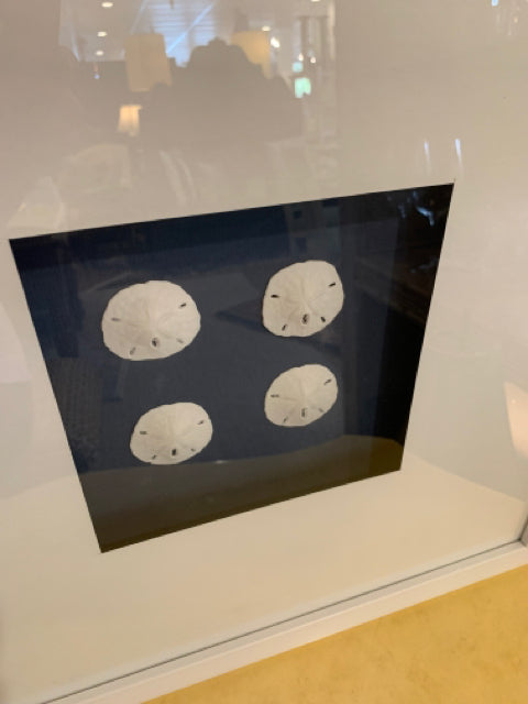 WALL ART SAND DOLLAR SHADOW BOX WITH WHITE FRAME