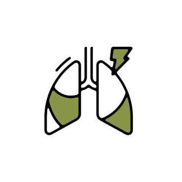 lung Bronchial and Sinus function