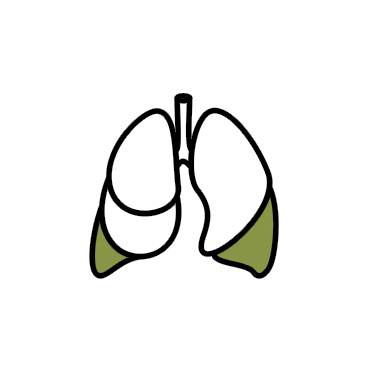 purifies lungs, lung detox, clean lung