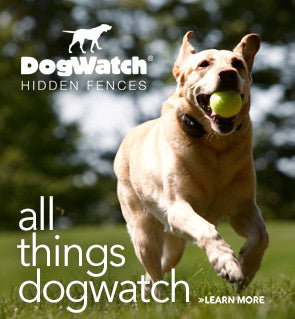 All Things DogWatch