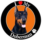 Doberman Decal Magnet