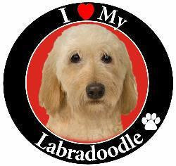 Labradoodle (Yellow) Decal Magnet