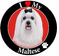 Maltese Decal Magnet