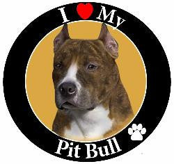 Pit Bull (Brindle/White) Decal magnet