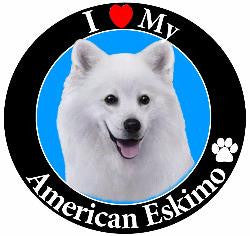 American Eskimo  Decal Magnet