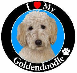 Goldendoodle Decal Magnet