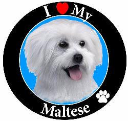 Maltese (Puppy Cut) Decal Magnet