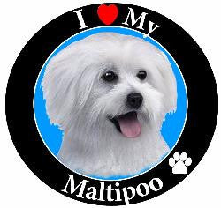 Maltipoo Decal Magnet