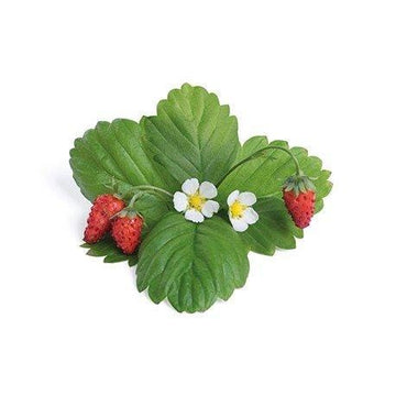 Lingot Red Wild Strawberry