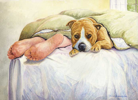 """Amstaff Feet"" A Limited Edition American Staffordshire Terrier Print"
