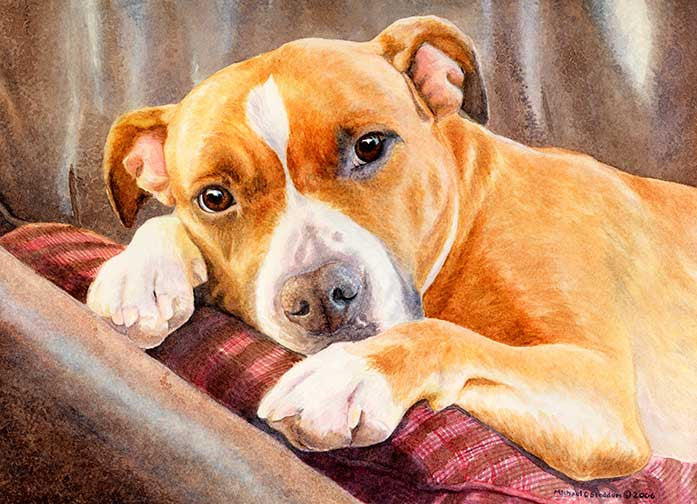 """Sleepy Time"" A Limited Edition American Staffordshire Terrier Print"