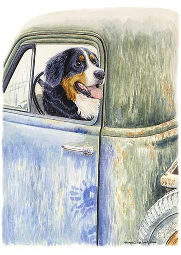 """Be Back in a Minute"" A Limited Edition Bernese Mountain Dog Print"