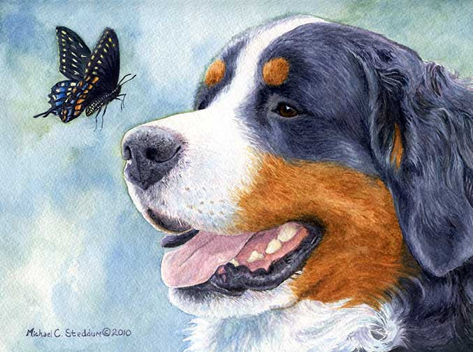 """Bernese Encounter"" A Limited Edition Bernese Mountain Dog Print"