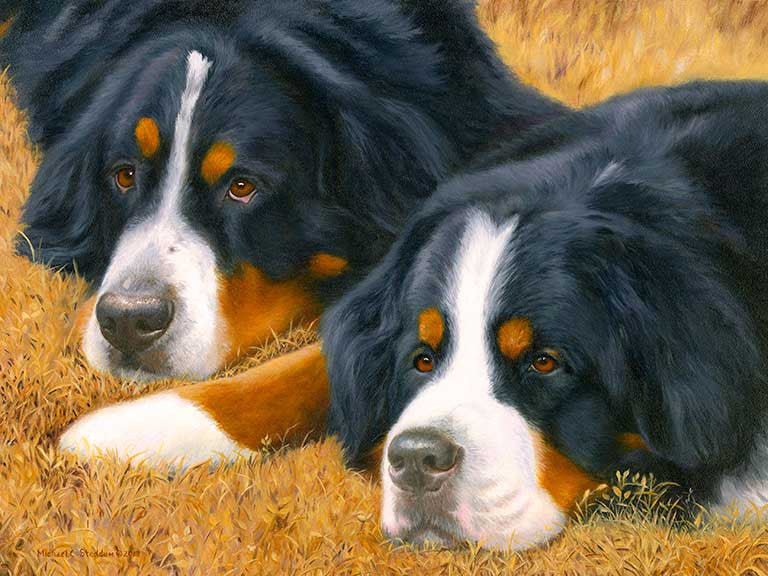 """Observers"" A Limited Edition Bernese Mountain Dog Print"