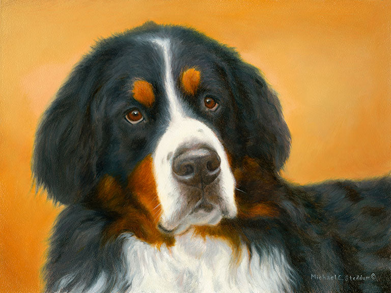 """Bernese Mountain Dog Oil Study"" Limited Edition Print"