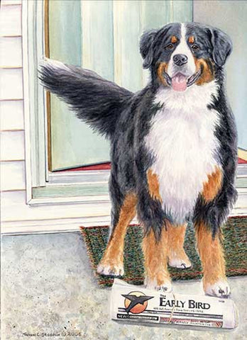 """Bernese Paper Boy"" A Limited Edition Bernese Mountain Dog Print"