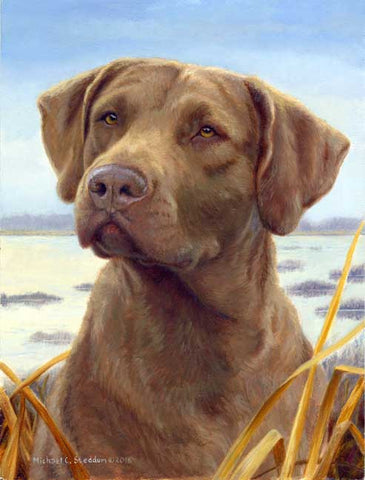 """Favored"" A Limited Edition Chesapeake Bay Retriever Print"