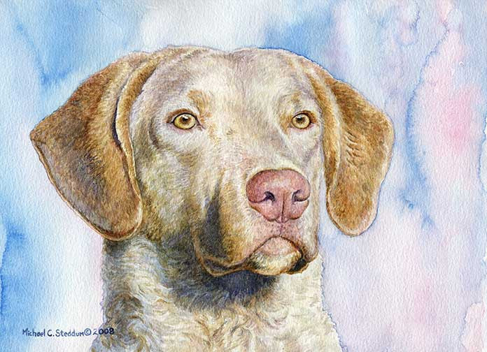 """Chesapeake Light Deadgrass"" A Limited Edition Chesapeake Bay Retriever Print"