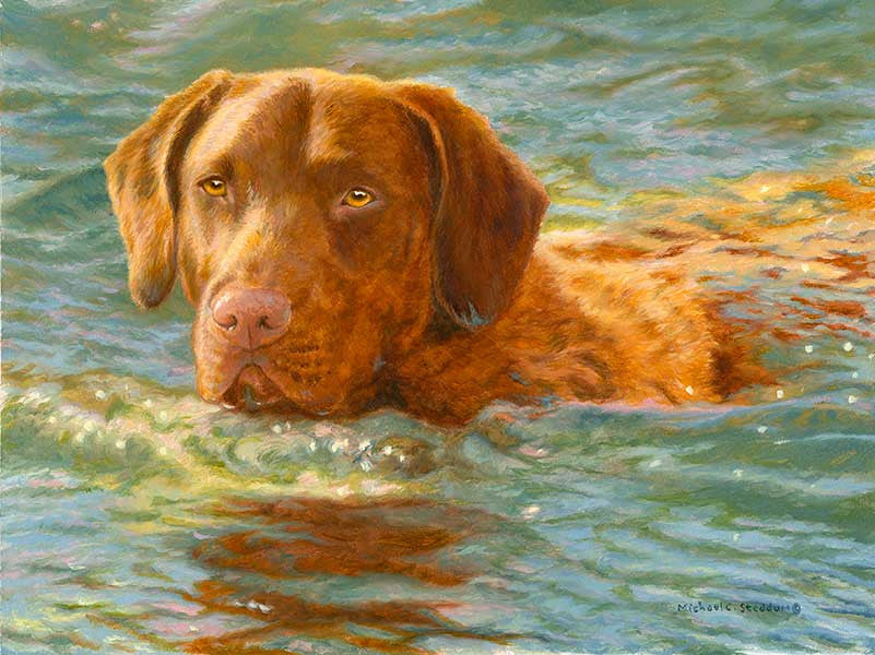 """On Mission"" A Limited Edition Chesapeake Bay Retriever Print"