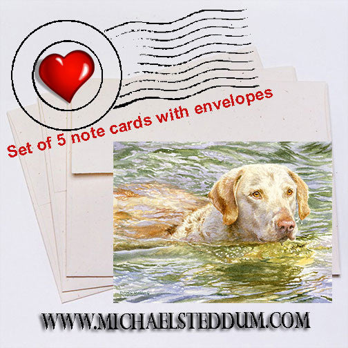 Summer Swim, Chesapeake Bay Retriever Note Card Set