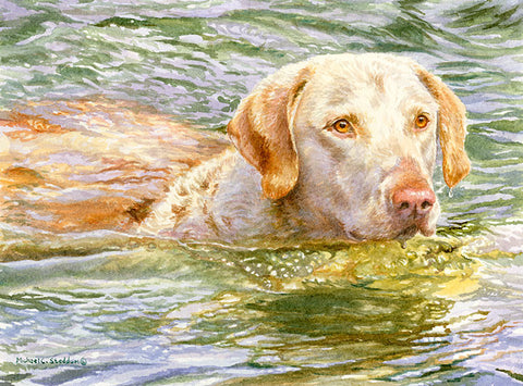 """Summer Swim"" A Limited Edition Chesapeake Bay Retriever Print"
