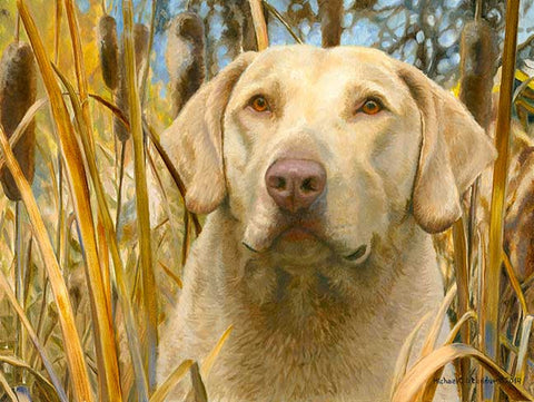 """The Moment Before"" A Limited Edition Chesapeake Bay Retriever Print"