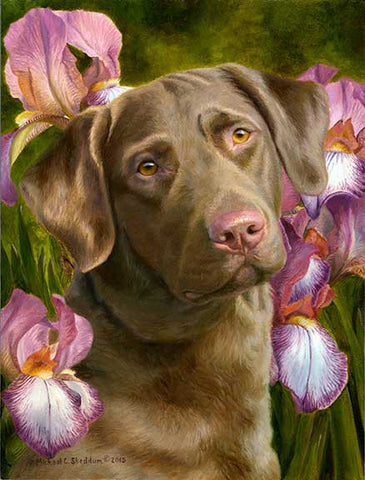 """Tribute"" A Limited Edition Chesapeake Bay Retriever Print"