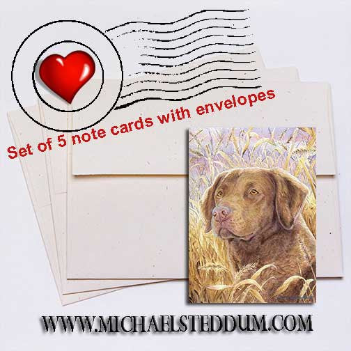 Chesapeake Head Study IV, Chesapeake Bay Retriever Note Card Set