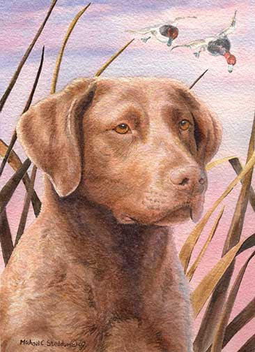 """Chesapeake Head Study III"" A Limited Edition Chesapeake Bay Retriever Print"