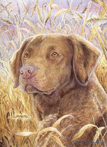 """Chesapeake Head Study IV"" A Limited Edition Chesapeake Bay Retriever Print"