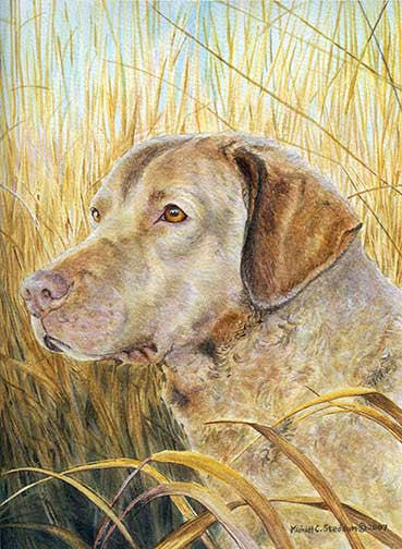 """Chesapeake Head Study V"" A Limited Edition Chesapeake Bay Retriever Print"