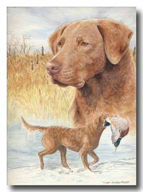 """Sassy"" Chesapeake Bay Retriever 11oz Coffee Mug"